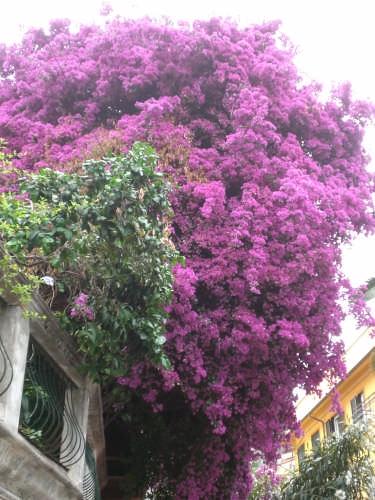 Monterosso al Mare (4059 clic)