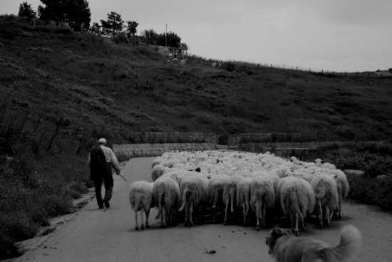 il pastore - Villarosa (3756 clic)