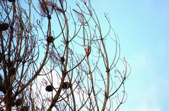 Picchio Rosso - Etna (3106 clic)