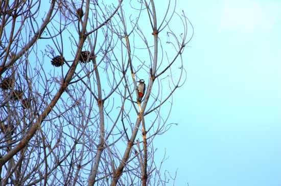 Picchio Rosso - ETNA - inserita il 02-Apr-10