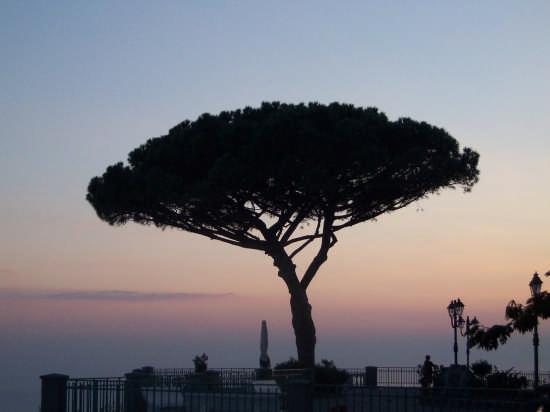Il pino - Ischia (3293 clic)
