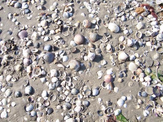 Spiaggia - Venezia (2521 clic)