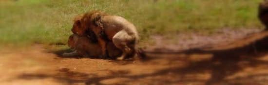 lavori in corso zoo safari fasano (5696 clic)