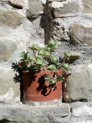 Il Castello della Verrucola - Fivizzano (2898 clic)