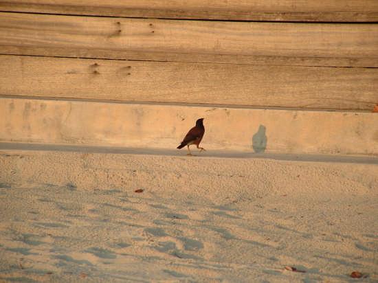uccello - Catania (2350 clic)