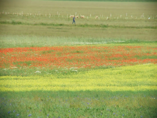 la fioritura - Castelluccio (1977 clic)