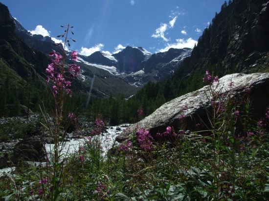 Parco Nazionale del Gran Paradiso - Cogne (9083 clic)