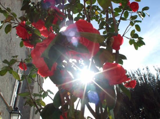 rose a villa d'este - TIVOLI - inserita il 27-Apr-08