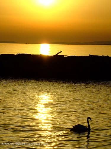 Un cigno al tramonto - Capodimonte (1996 clic)
