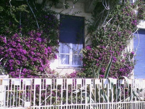 fiori a monterosso - Monterosso al mare (3009 clic)