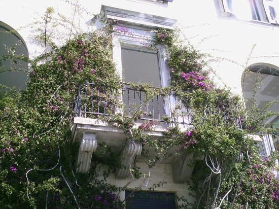 fiori a monterosso - Monterosso al mare (2520 clic)