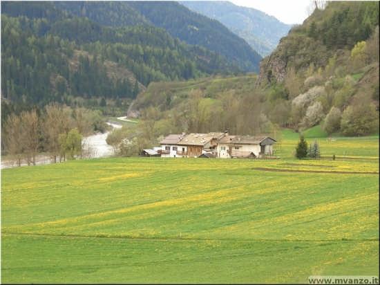 frazione Cavazzal  fioritura primaverile - Cavalese (3078 clic)