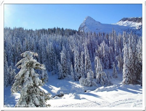 Neve... Passo Rolle (7084 clic)