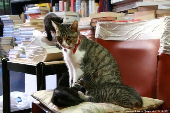 Anche i gatti vanno in libreria - VENEZIA - inserita il 18-Feb-09