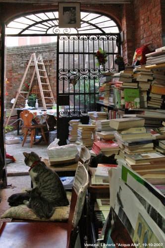 Gatti in libreria - Venezia (3749 clic)