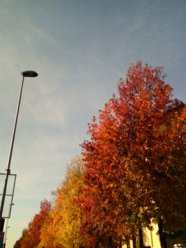 autunno novarese - Novara (2216 clic)
