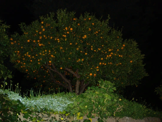 Lumini di Sicilia - Nebrodi (3202 clic)