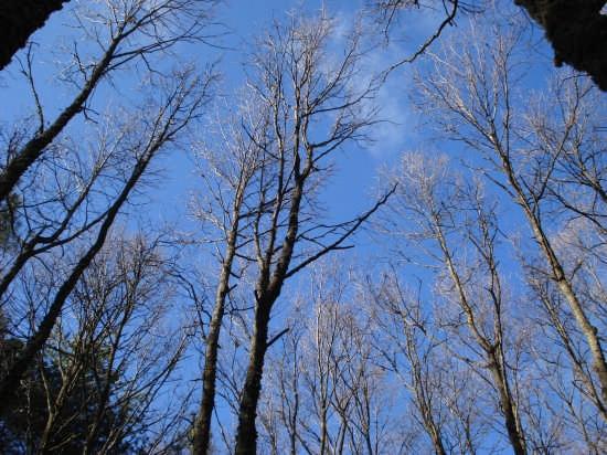 Cime di cerri, d'inverno - Nebrodi (3839 clic)