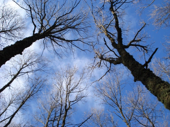Uno sguardo verso il cielo - Nebrodi (3699 clic)