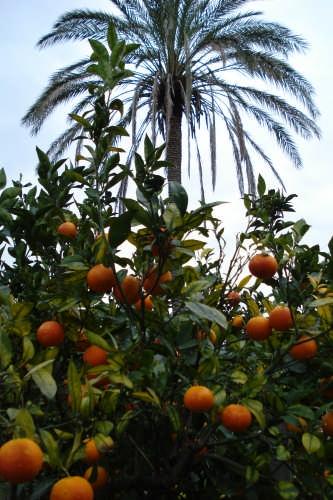L'arancio e la palma. - Nebrodi (3123 clic)