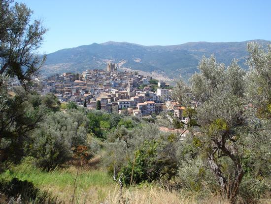 Scorcio fra gli ulivi - Pettineo (3403 clic)