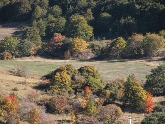 Pescocostanzo bosco S. Antonio colori autunnali (2404 clic)