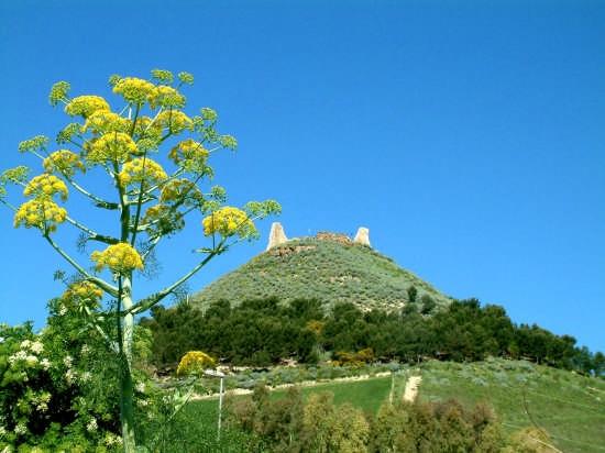 castello las plassas - Collinas (2682 clic)