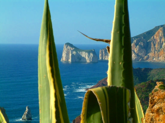 foto del cactus - Iglesias (3969 clic)