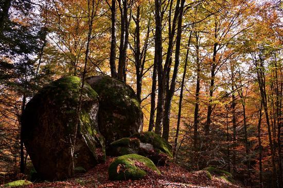 Masso a sfera nella foresta eminente - Stilo (551 clic)