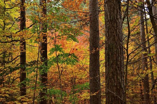 Incantesimo d'autunno - Camigliatello silano (348 clic)