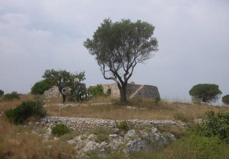 La tipica macchia mediterranea...sulla collina a pochi Km dal centro B&B Florenza - Ugento (6059 clic)