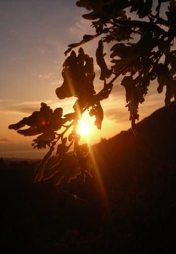 SOLE TRA LE FOGLIE - Lascari (3617 clic)