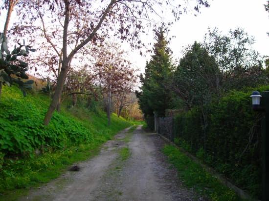 viale - Lascari (3743 clic)