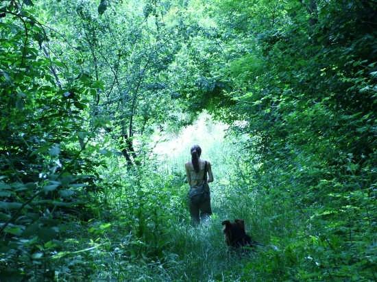 Immersi nel verde dei Colli Bolognesi - Bologna (6606 clic)