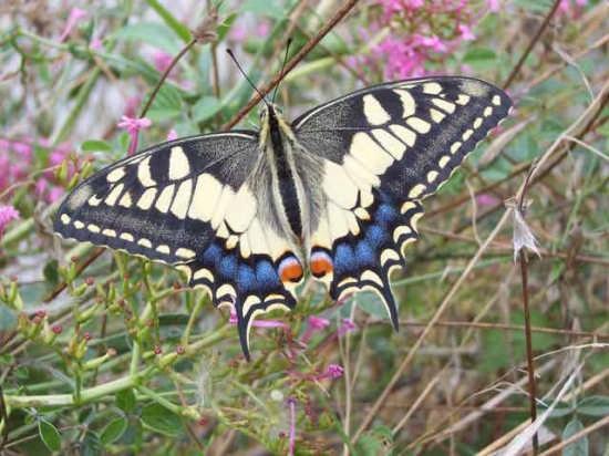 Natura - Mussomeli (2602 clic)