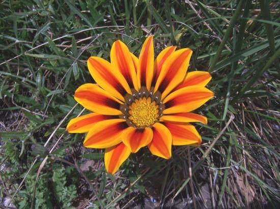 Natura - Mussomeli (2249 clic)