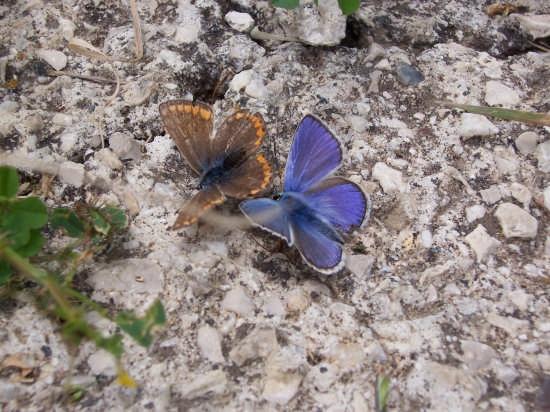 Natura - Mussomeli (2349 clic)