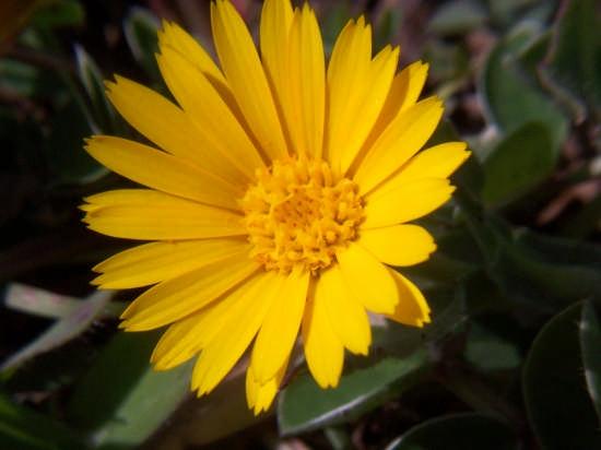 Natura - Mussomeli (2300 clic)