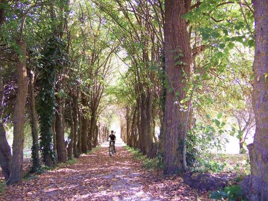 Passeggiata ecologica - Mussomeli (2418 clic)