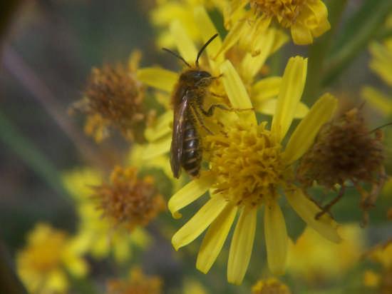 Natura - Mussomeli (2415 clic)
