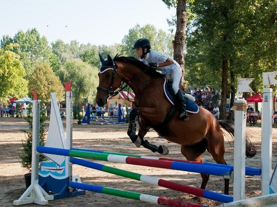 Villanova di S.Daniele Alleva cavalli 2011 - San daniele del friuli (2263 clic)