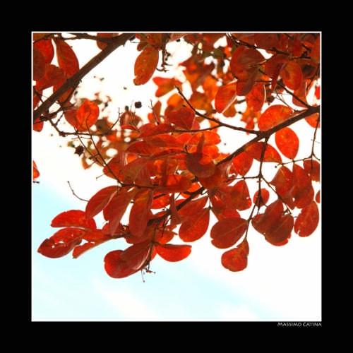 colori d'autunno - Ficarra (2797 clic)