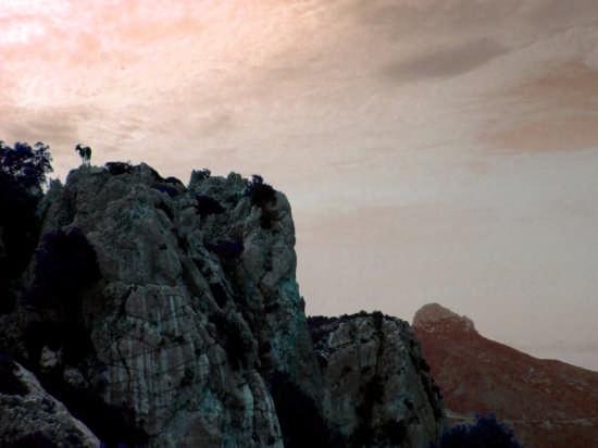 Capra al tramonto - Oliena (2562 clic)