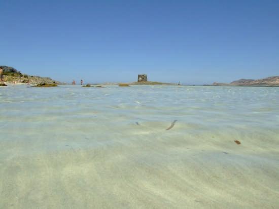 Dune d'acqua - Stintino (11344 clic)