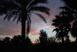 Parco - Olbia (2666 clic)