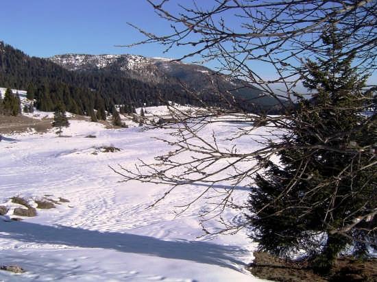 La luce della neve. - Folgaria (4426 clic)