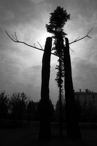giardini reggia Venaria - Torino (1880 clic)