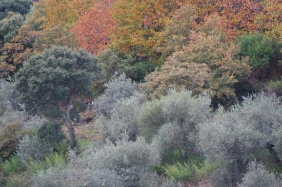 colori d'autunno - Olbia (3125 clic)