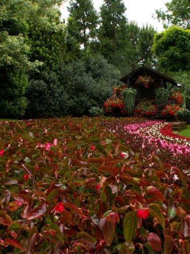 fiori - Scanno (1619 clic)