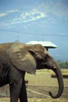 Zoo Safari di Paternò  - Paternò (2361 clic)
